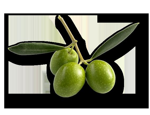 green-olive-prasini-elia